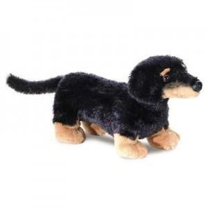 sausage-dog